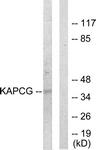 C10451-1 - PRKACG