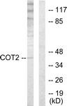 C10471-1 - NR2F2