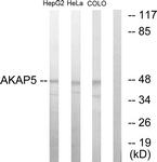 C10472-1 - AKAP5