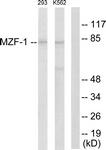 C10502-1 - MZF1