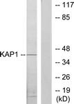 C10527-1 - PRKAR1B