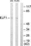 C10538-1 - ELF1