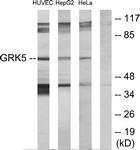 C10545-1 - GPRK5