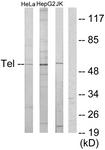 C10593-1 - ETV6 / TEL1