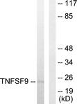 C10600-1 - 4-1BBL / TNFSF9