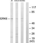 C10613-1 - GRK6
