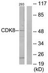 C10643-1 - CDK8