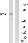 C10688-1 - BMX