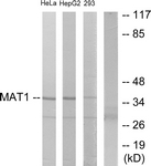C10691-1 - MNAT1 / RNF66
