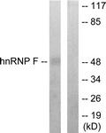 C10700-1 - hnRNP-F / HNRNPF