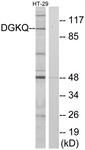 C10713-1 - DAG kinase theta