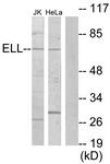 C10738-1 - ELL