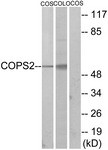 C10768-1 - COPS2 / TRIP15