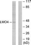 C10773-1 - LMO4
