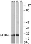 C10809-1 - SFRS3