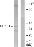 C10820-1 - CDKL1