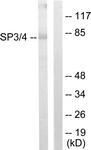 C10849-1 - SP3 / SPR-2