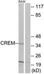 C10864-1 - CREM