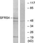 C10906-1 - SFRS4