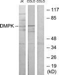 C10910-1 - DMPK