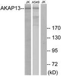 C10921-1 - AKAP13