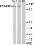 C10956-1 - PSMD2 / TRAP2
