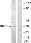C11053-1 - NR1I3