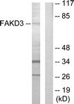 C11055-1 - FASTKD3