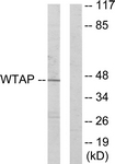 C11057-1 - WTAP