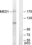 C11093-1 - MED1