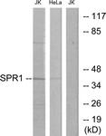 C11103-1 - GPR68 / OGR1