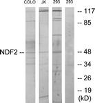 C11108-1 - NEUROD2