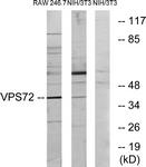 C11112-1 - VPS72