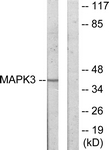 C11133-1 - MAPKAP Kinase-3