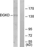 C11140-1 - DAG kinase delta