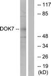 C11148-1 - DOK7