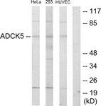 C11156-1 - ADCK5
