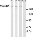 C11224-1 - MAST2