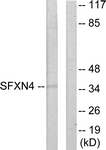 C11227-1 - Sideroflexin-4 (SFXN4)