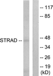 C11258-1 - STRAD alpha / LYK5