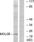 C11272-1 - MOBKL2B