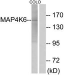 C11342-1 - MINK1