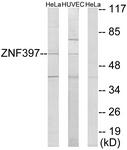 C11371-1 - ZNF397