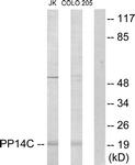 C11380-1 - PPP1R14C