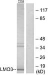C11382-1 - Rhombotin-3