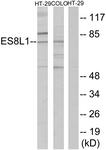 C11395-1 - EPS8L1