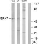 C11400-1 - GRK7
