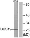 C11401-1 - DUSP19