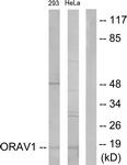 C11406-1 - ORAOV1