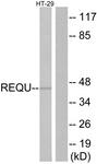 C11434-1 - UBID4 / DPF2